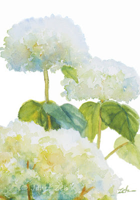 Annabelle Hydrangeas watercolor painting