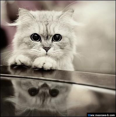 صور صور قطط كيوت 2020 خلفيات قطط جميلة جدا cats35.png