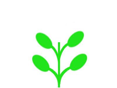 ハイグロフィラなどの対生の水草模式図(ピンチカット後)