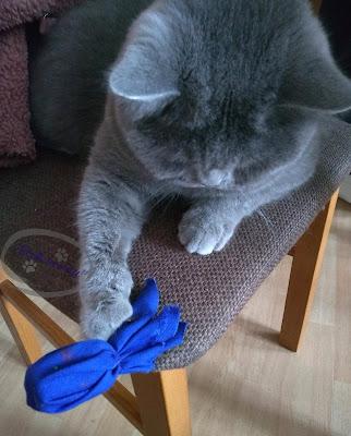 Jak zrobić zabawkę-rybkę dla kota z recyklingu