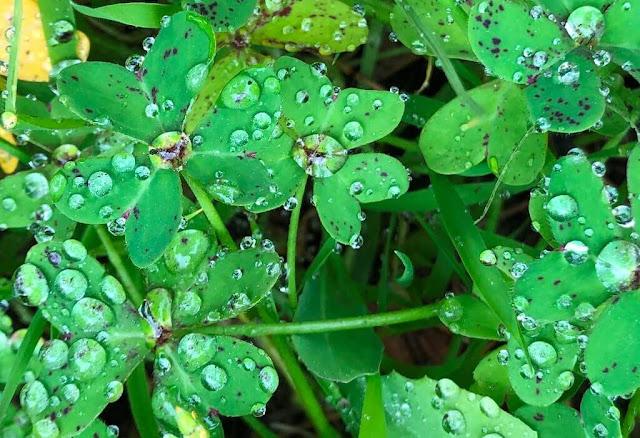 Gotas de chuva na natureza