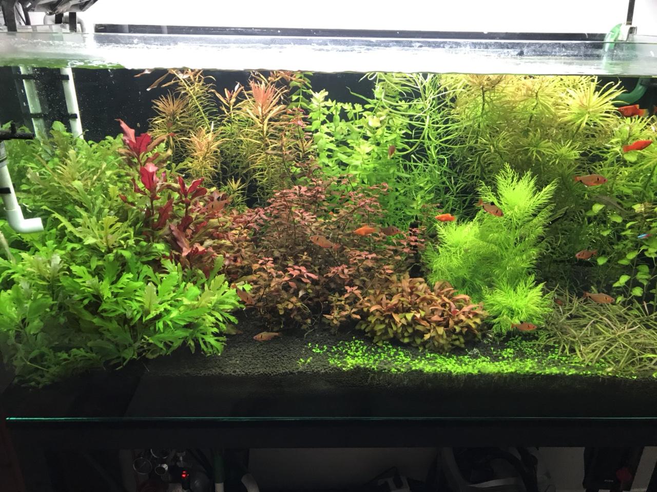 hồ thủy sinh cập nhật 13-06-2018