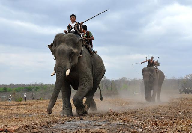 Cưỡi voi du ngoạn núi rừng hòa nguyện với thiên nhiên