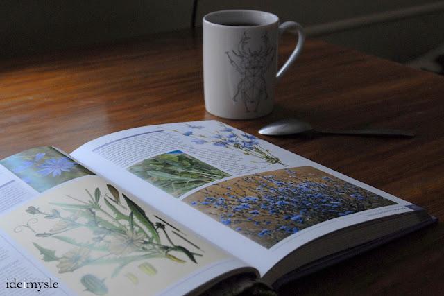 atlas dzikich kwiatów, dzikie rośliny jadalne, edible wild plants book