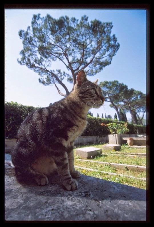 Rome Catholic Cemetery Campo Verano