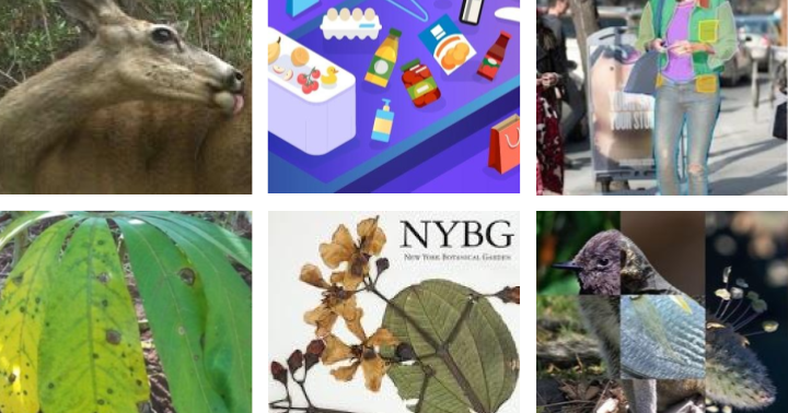 Google AI Blog: Announcing the 6th Fine-Grained Visual