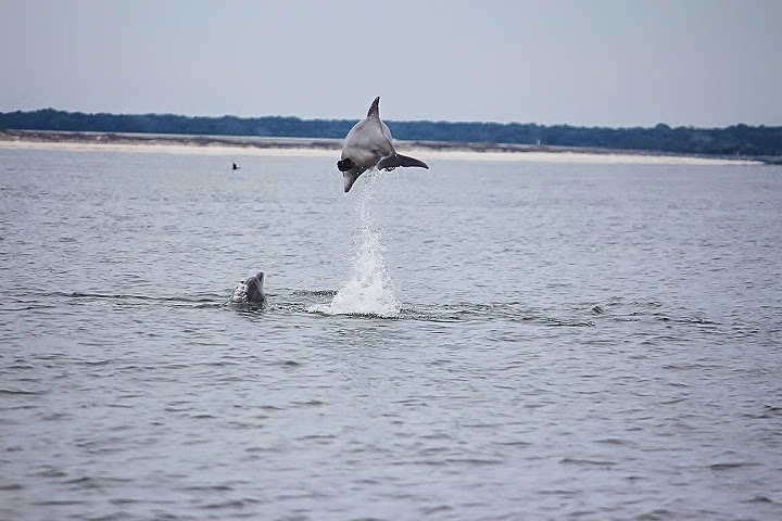 Marine Life is part of the day...