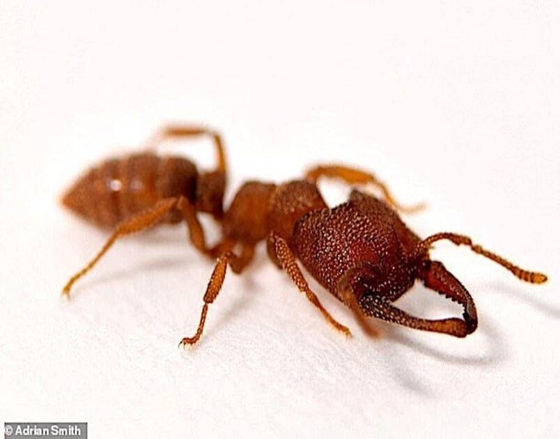 Serangga Paling Pantas Di Dunia
