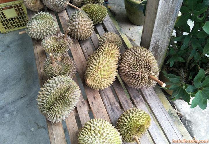 Durian kahwin kualiti terbaik di Farm Stay Relau