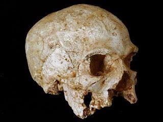 جمجمة Hofmeyr و أول من سكن أفريقيا جنوب الصحراء