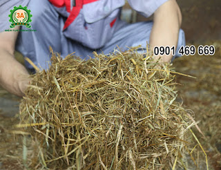 Máy nghiền xơ dừa 3A15Kw