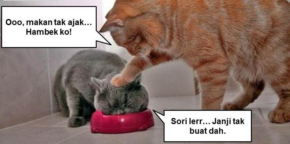 10 Gambar Kucing Lucu - Syurga Itu Indah