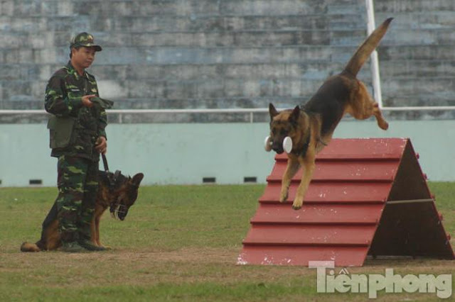 Huấn luyện chó vượt chướng ngại vật