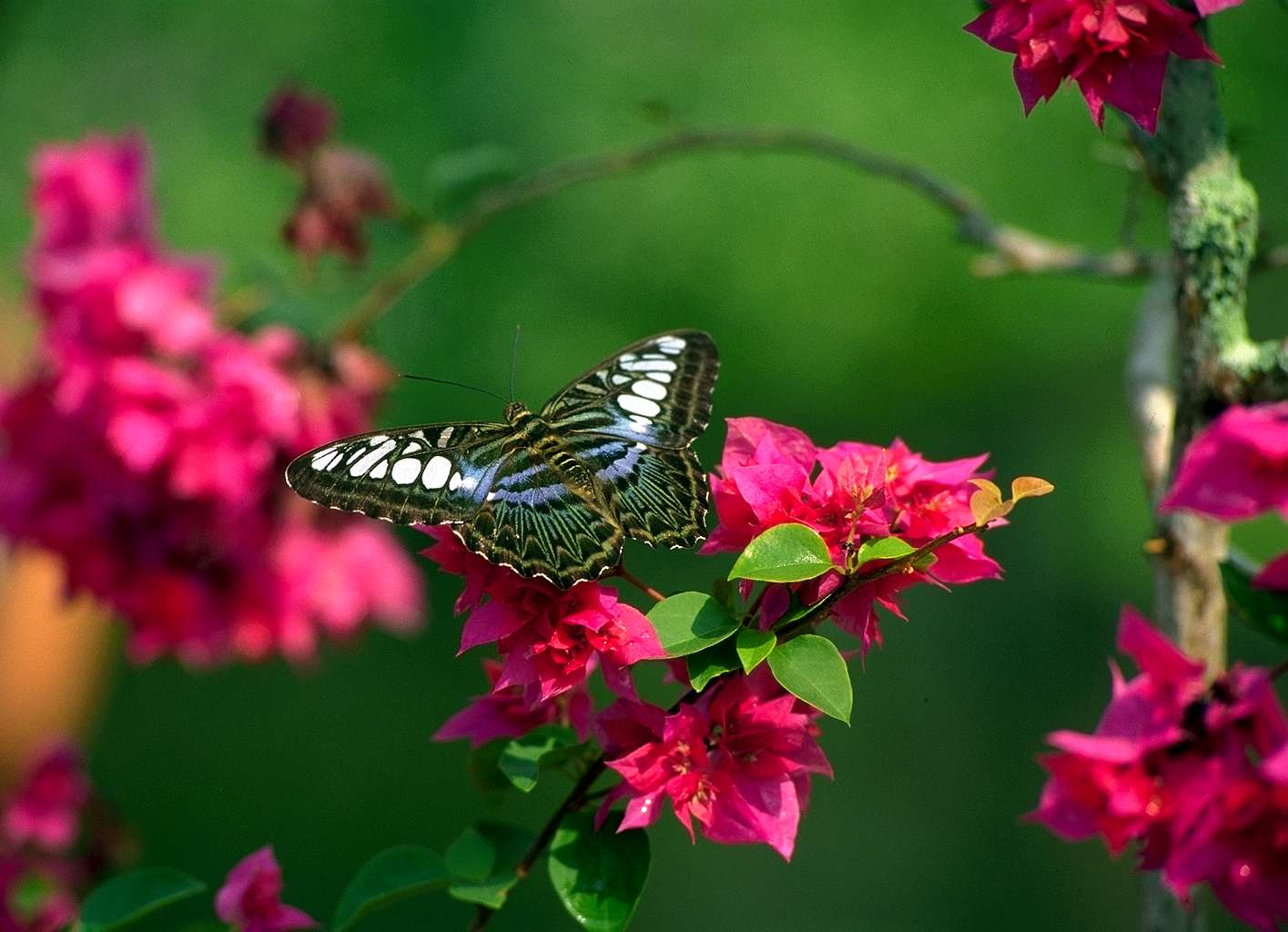 Beautiful Pictures Of Flowers And Butterflies Birds Flowers For Flower Lovers Flowers Butterfly Natural