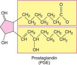 Funciones del acido araquidonico