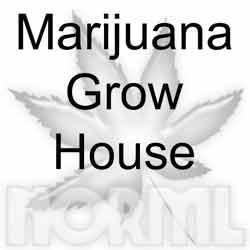 Marijuana Trafficking, Manufacture of Cannabis,  #cannabiscommunity, #cannabislaws, #marijuana, #norml