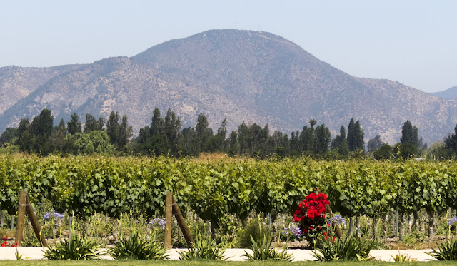 Day Trip from Santiago Chile: Unurraga Vineyard with mountains behind
