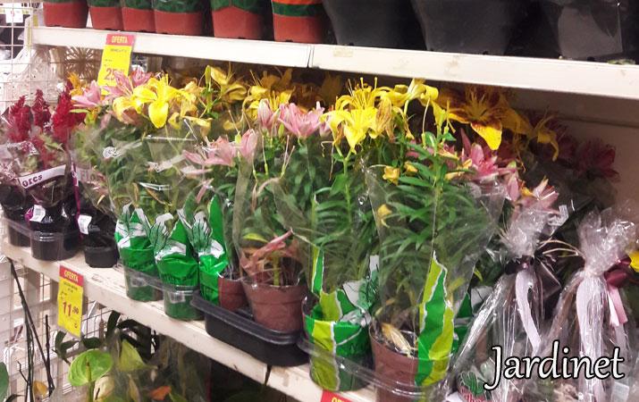 Comprinha de plantas e sementes na leroy merlin 1 for Plantas decorativas en leroy merlin