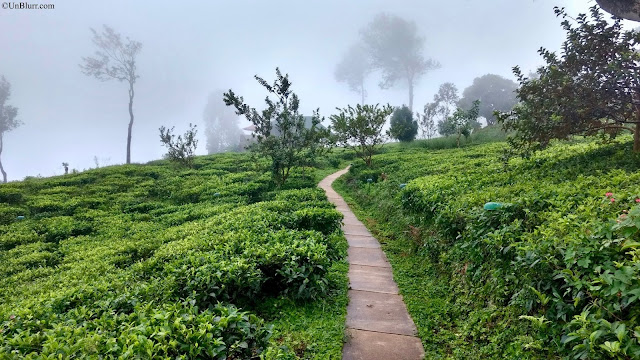 Tea Plantations in Sri Lanka!