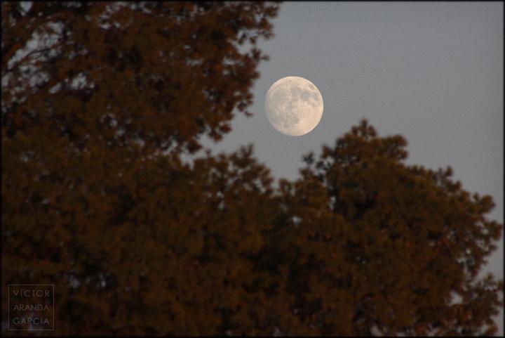 fotografia,luna,naturaleza,arbol,fuente_alamo,murcia