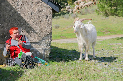 Fear of Goats