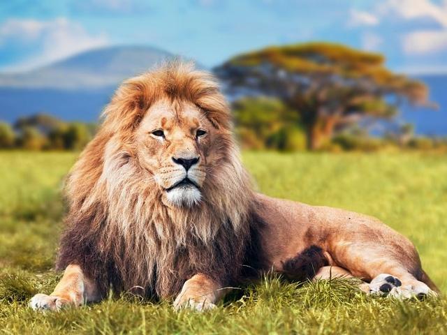 Câu chuyện ngắn ý nghĩa: Con sư tử tham lam
