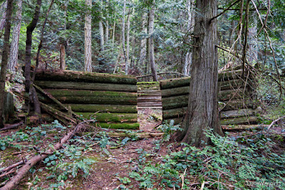 Miner's Cabin Ruin, c. 1910-1920, The John Tursi Trail