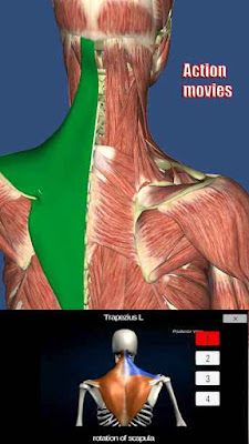 My Muscle Anatomy for Android