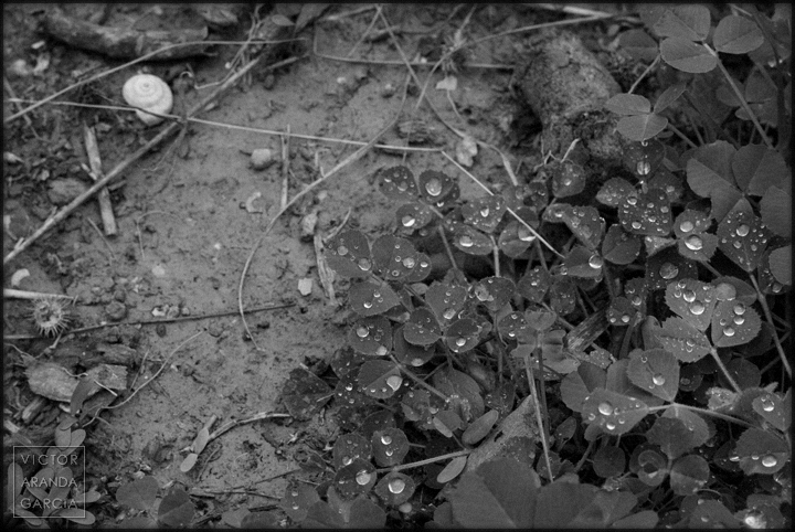 gotas,agua,foto,tierra,naturaleza,plantas,fuente-alamo,murcia