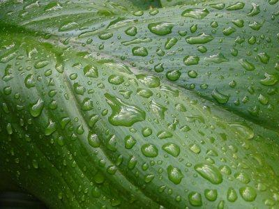 تجربة. اظهار. مصير. الماء .الزائذ .عن. حاجة .النبات .الاخضر. - النتح. transipation .-