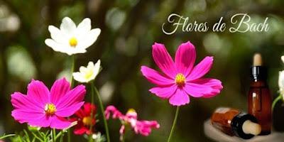 superar ansiedad flores bach