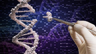 cặp sinh đôi ở Trung Quốc sau khi xét nghiệm ADN cho thấy cha đẻ của họ khác nhau