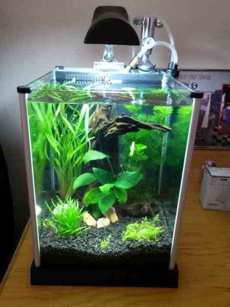 Gambar Aquarium Ikan Hias Air Tawar Model Terbaru