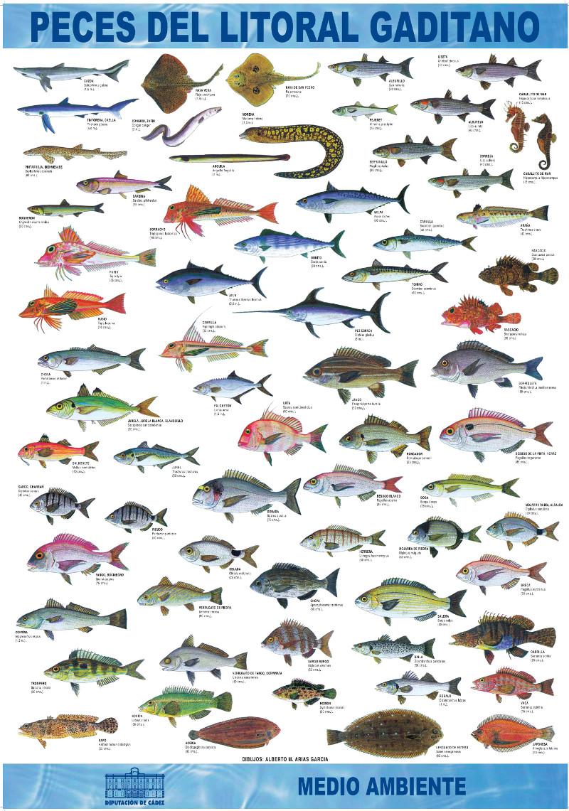 Spinning costa de la luz especies de peces en la costa de for Especies de peces