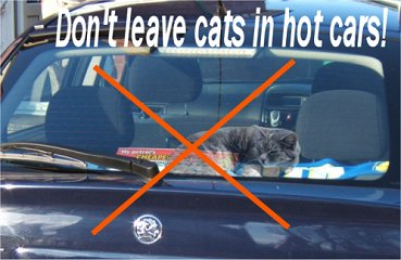 Highland Springs Pet Services Llc Heat Stroke And