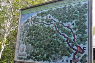 peta wisata tracking mangrove karimunjawa