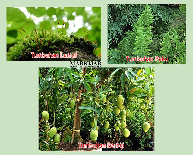 Contoh gambar tumbuhan lumut, tumbuhan paku dan tumbuhan berbiji