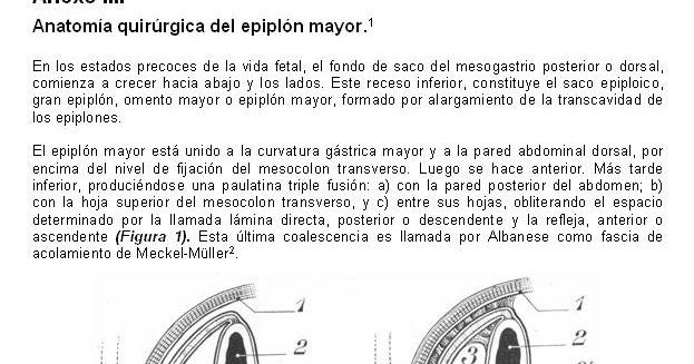 Cuadernos de Anatomía Quirúrgica: Anatomía quirúrgica del epiplón mayor.