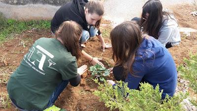 """ΝΕΑ ΑΚΡΟΠΟΛΗ - Σεμινάριο εθελοντισμού από το """"PLAN BEE"""""""
