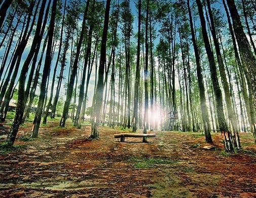 [Image: Hutan%2BNongko%2BIjo%2BKare.jpg]
