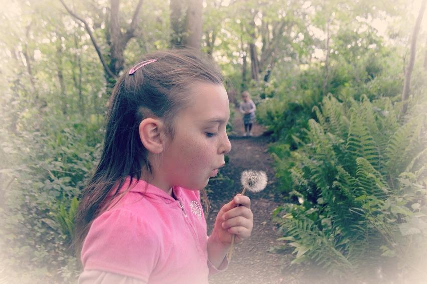 , Dandelion Duvet Covers to Dream Under…