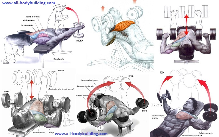 how to work out pecs with dumbbells