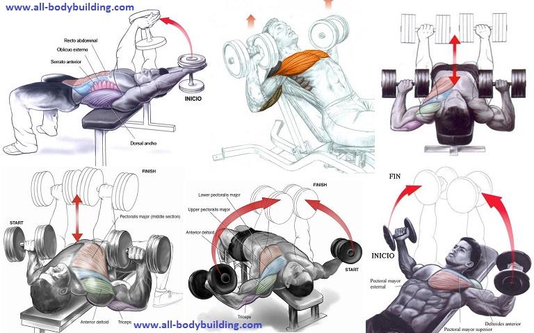 The Best Dumbbell Chest Exercises Multiple Fitness