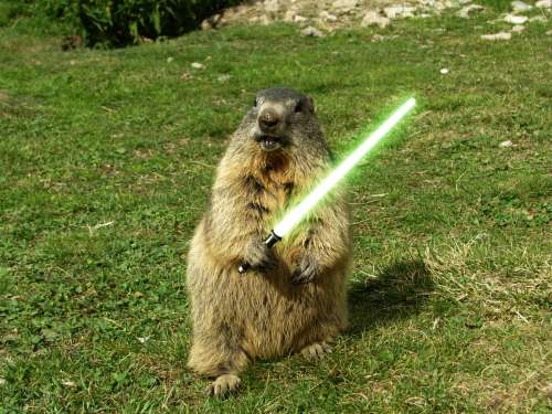 Groundhogs Woodchucks How To Deal With Them