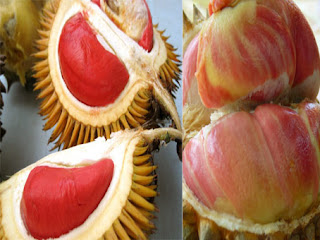 varian durian merah