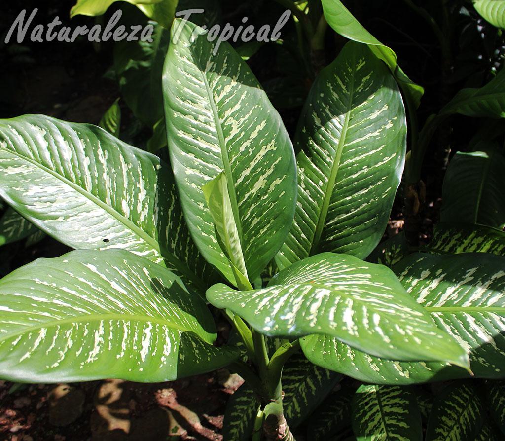 Naturaleza tropical 5 grupos de plantas de atractivo for 6 plantas ornamentales