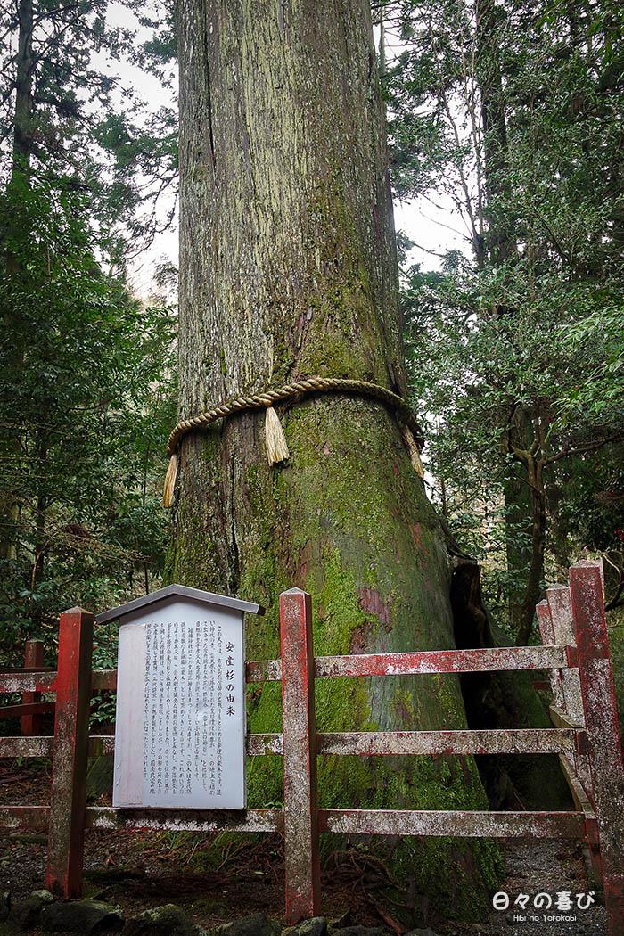 arbre yorishiro et sa corde sacree hakone jinja