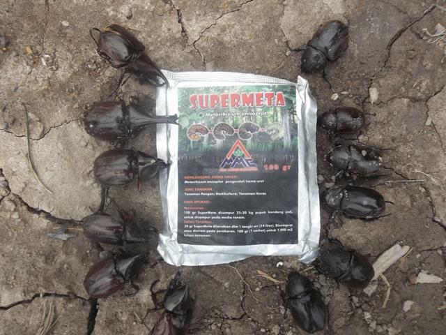 Mosa Meta - Pestisida Organik Perkebunan Obat Hama Larva Kumbang Gayas Embuk