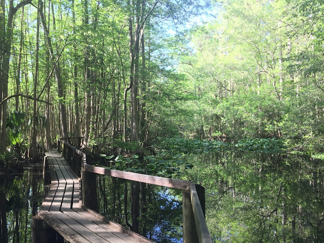 Great RV Camping Sites Near Orlando and Central Florida