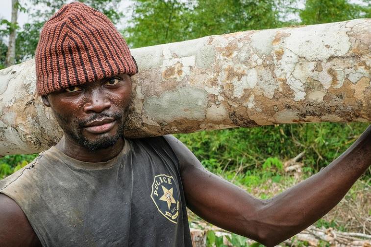 Logger in the Democratic Republic of the Congo